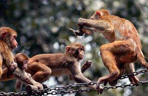 东阳木雕猴子图片大全