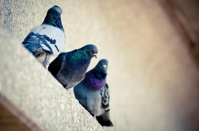 动物园里的鸽子-职场故事-义乌人才网-恒信人才网-91