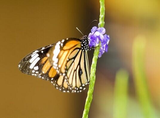 透明通道蝴蝶素材